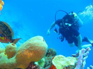 Vakantie Bonaire voor de beste deal bij Topvakantiedeal.nl